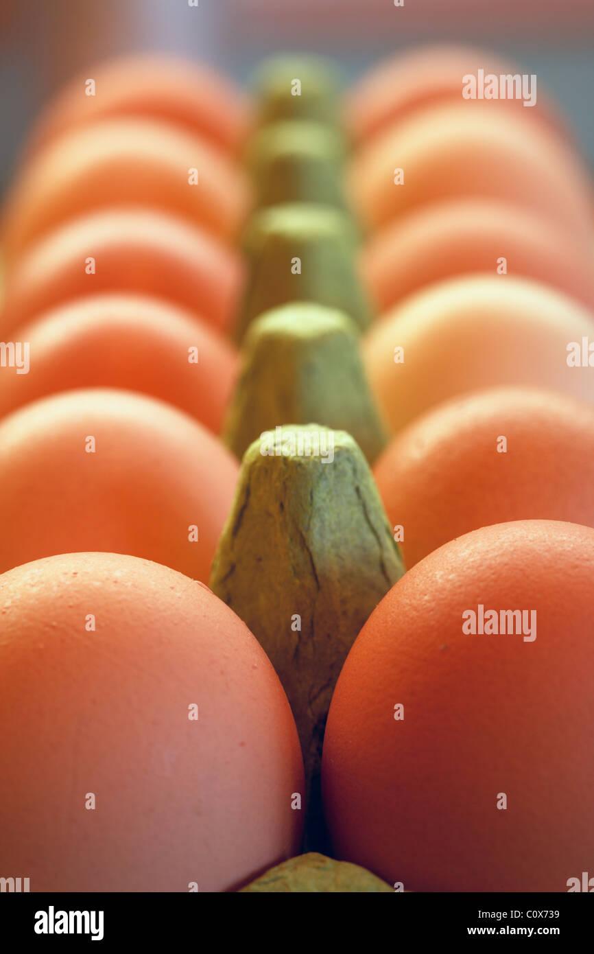 Organic free range chicken eggs in green egg box. - Stock Image