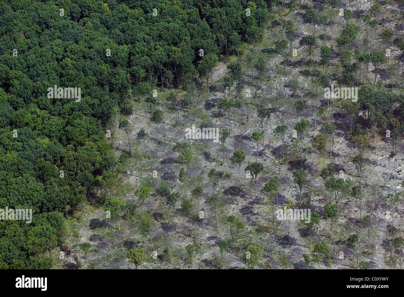 aerial view above selective tree cutting deciduous forest Pennsylvania - Stock Image