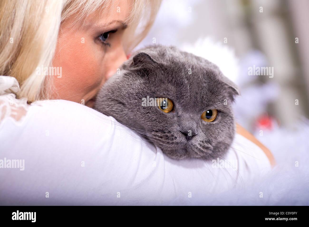 xmas portrait of a cat Stock Photo