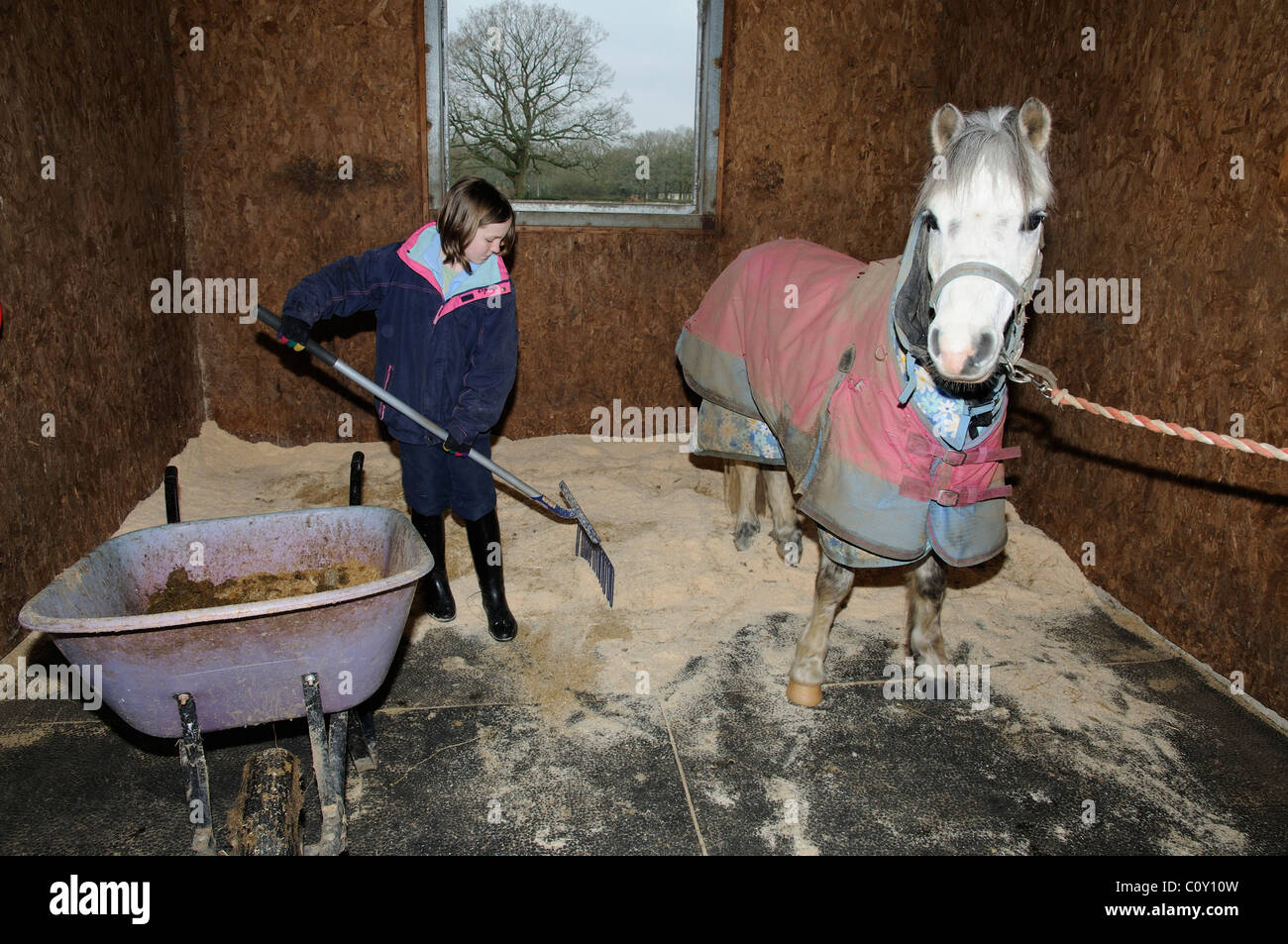 Little Girl Mucking Out Her Pony S Stable Stock Photo