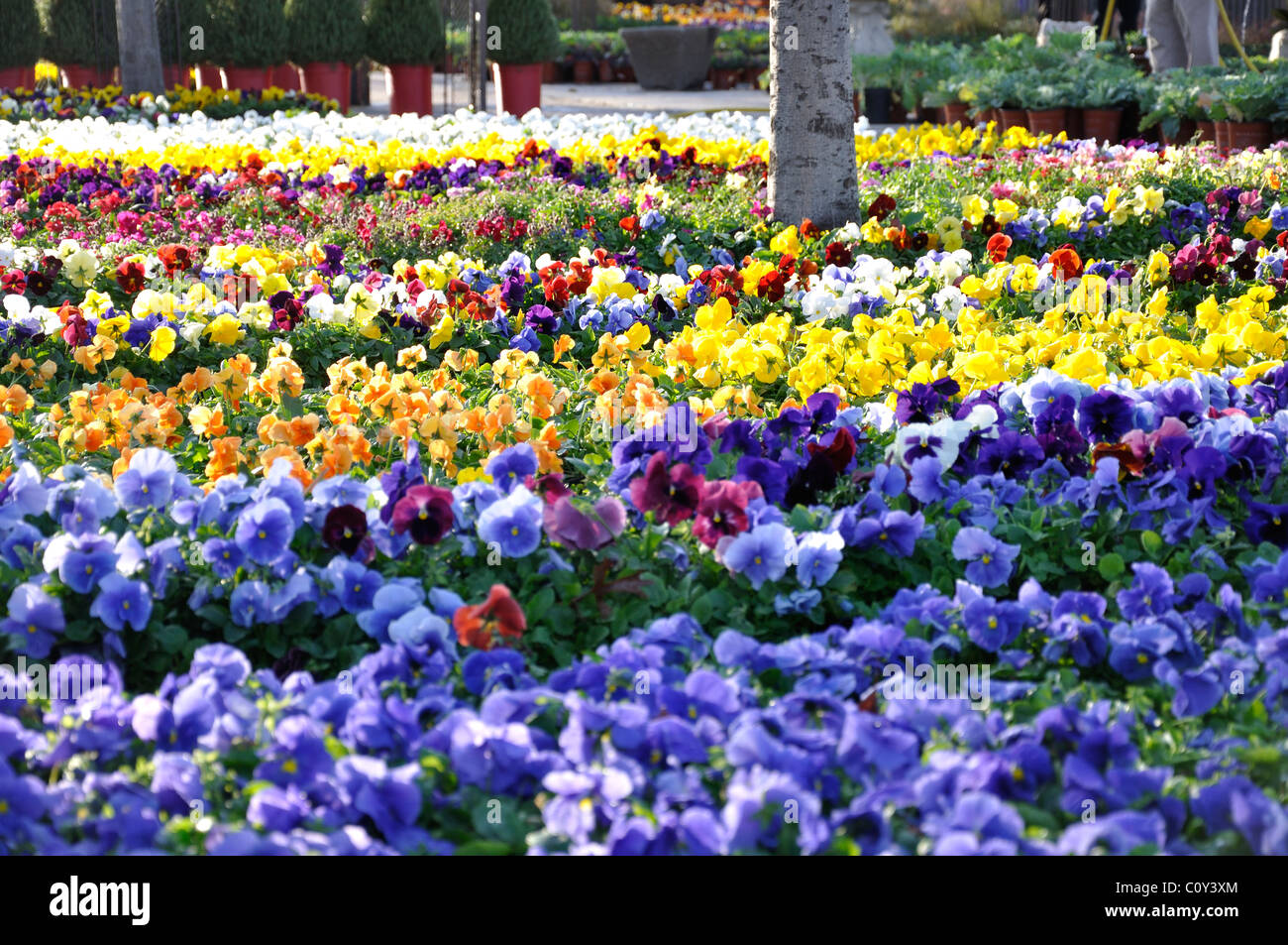 Spring Flowers For Sale At Farmers Market In Dallas Texas Usa