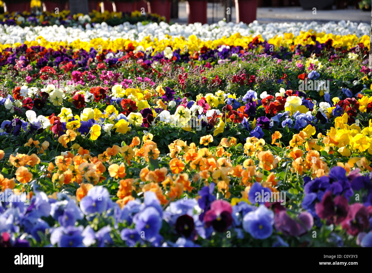 Usa texas dallas flower market stock photos usa texas dallas spring flowers for sale at farmers market in dallas texas usa stock image izmirmasajfo