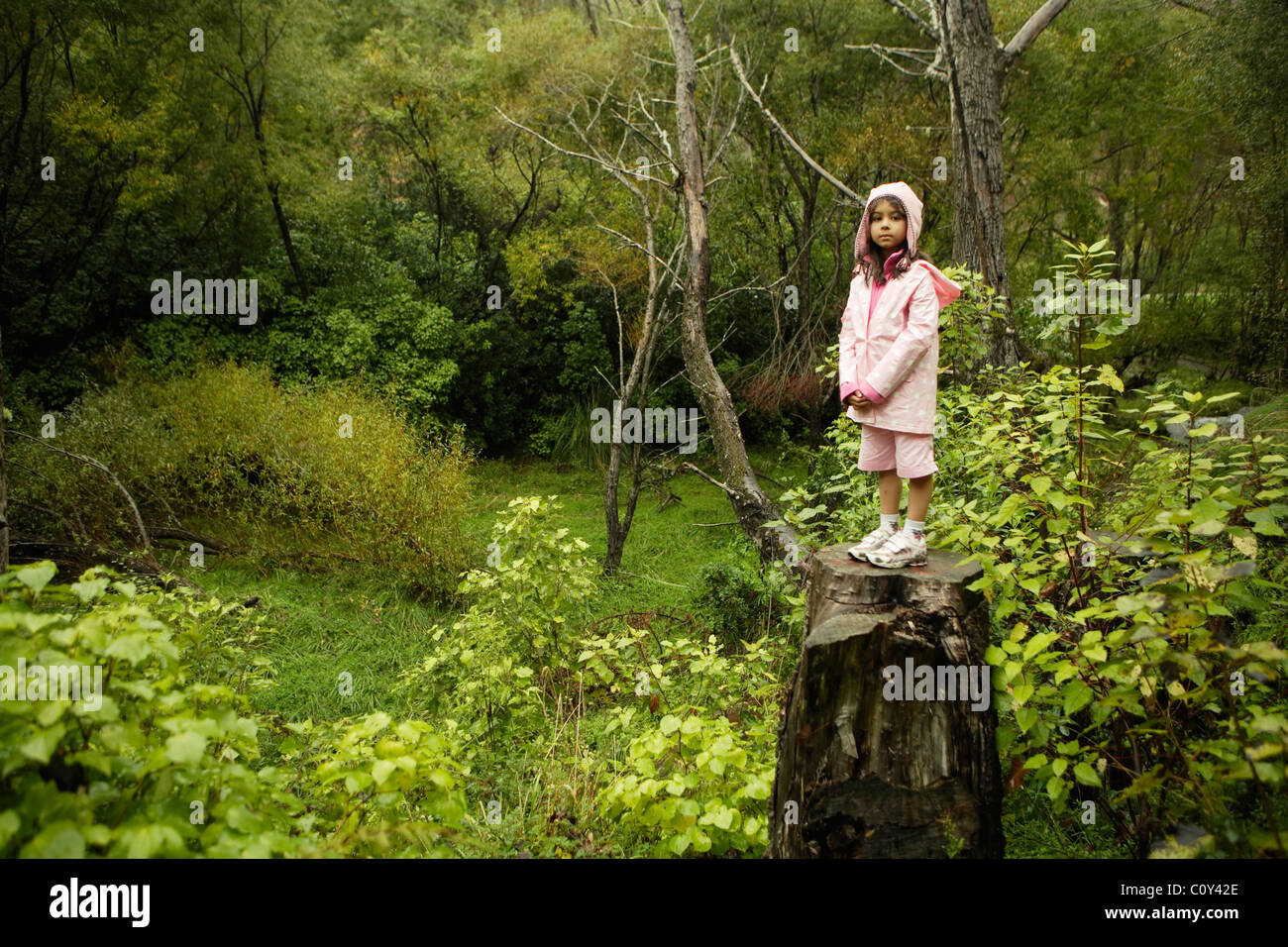 Six year old girl in pink stands on tree stump in woodland, New Zealand - Stock Image