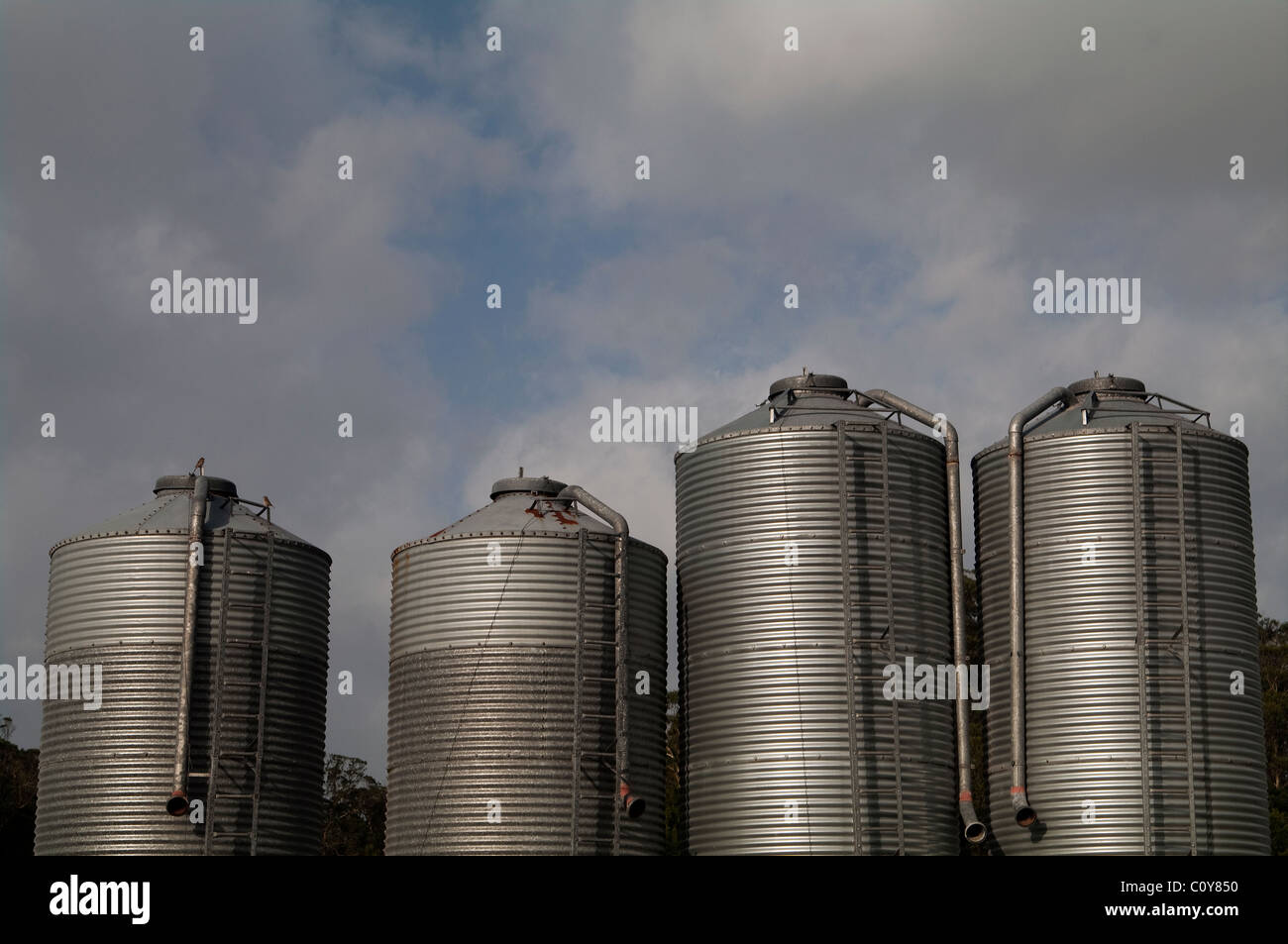 Feed silos outside broiler chicken poultry farm in Terceira island in the Azores - Stock Image