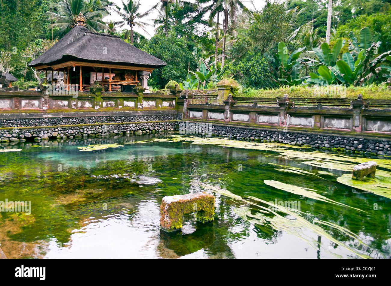 Green Pond in Ubud temple site in Bali Indonesia - Stock Image