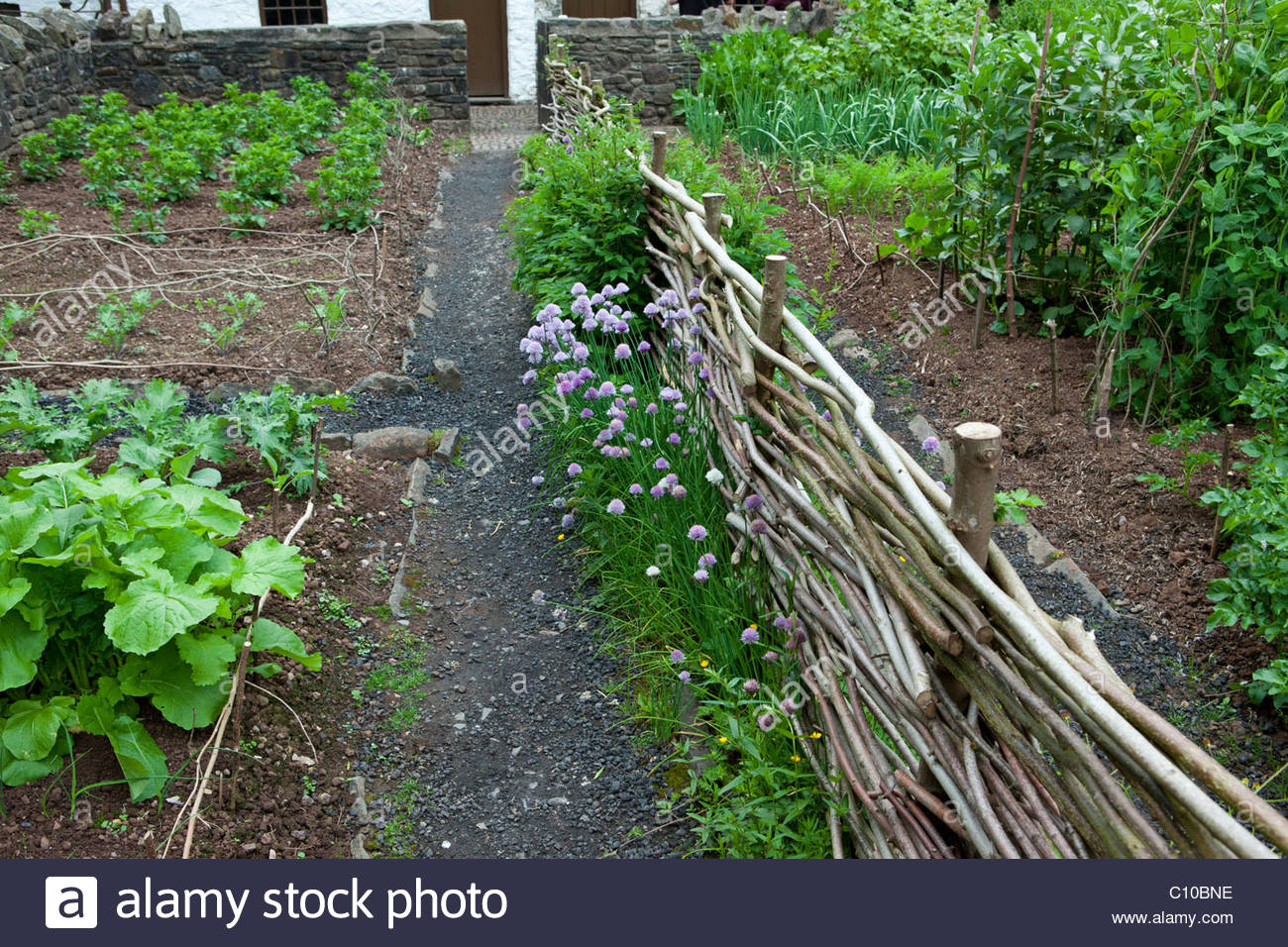 Small, neat vegetable garden - Stock Image