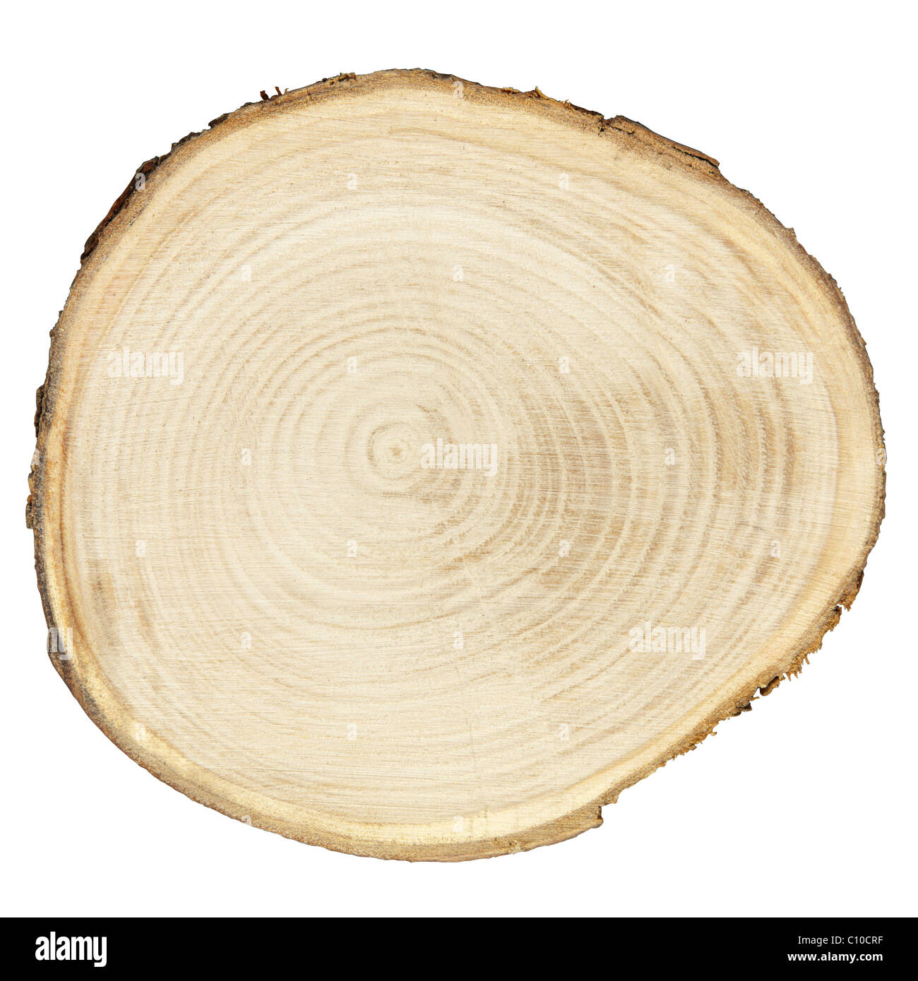 Cross section of tree trunk isolated on white - Stock Image