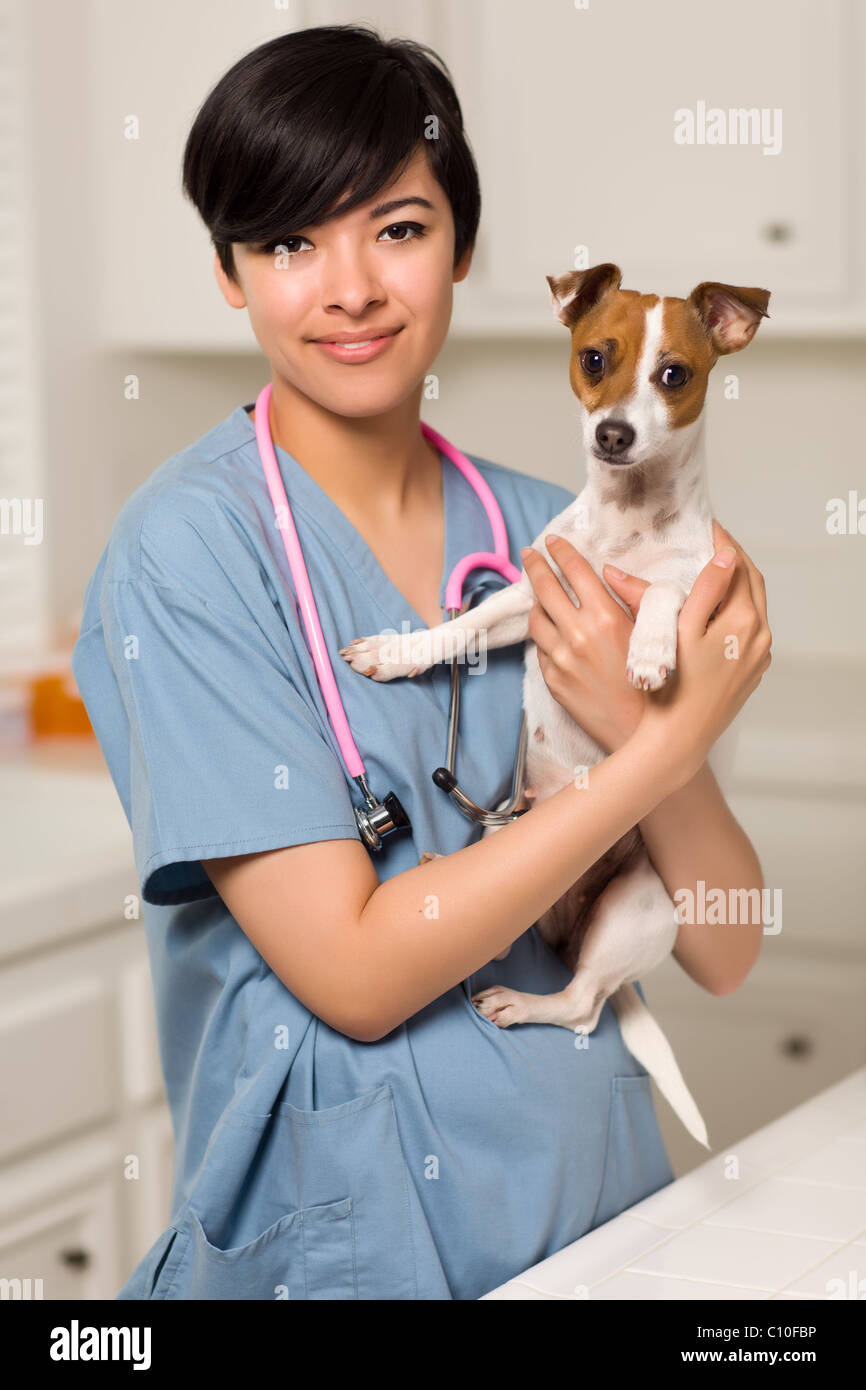 Smiling Attractive Mixed Race Veterinarian Doctor or Nurse with Puppy in an Office or Laboratory Setting. Stock Photo