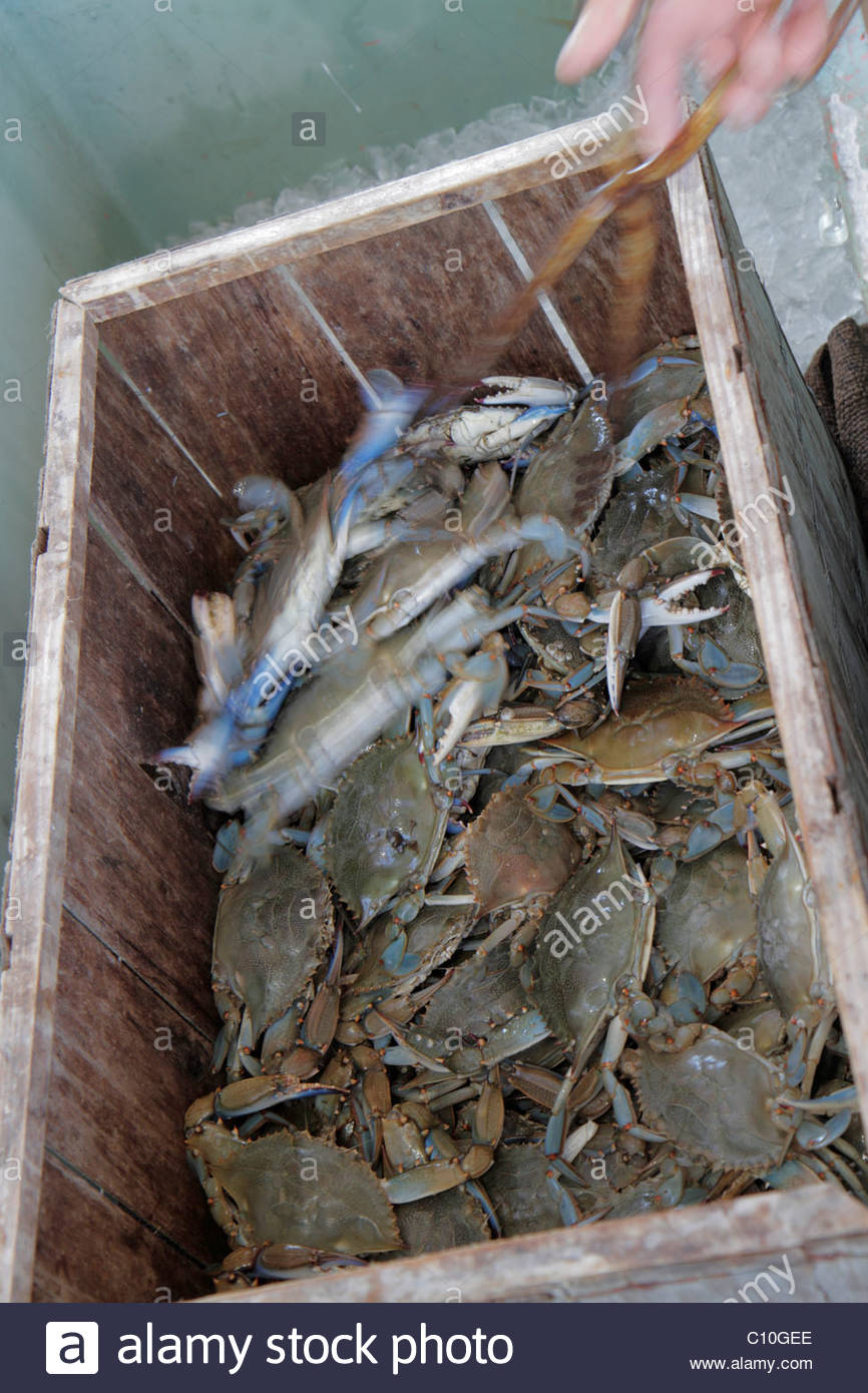 Blue Crabs Stock Photos & Blue Crabs Stock Images - Alamy
