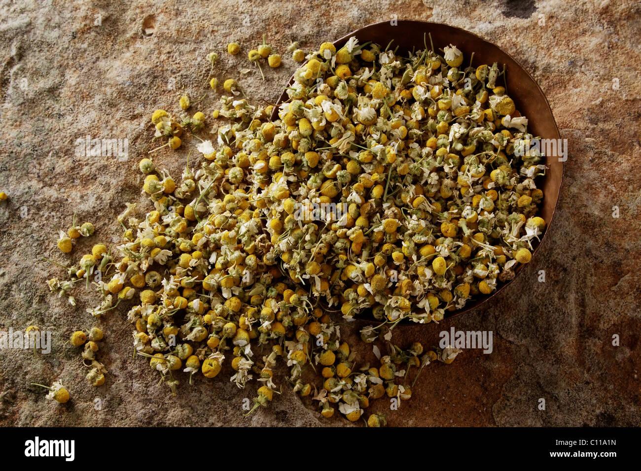 German Chamomile (Matricaria chamomilla), blossoms, in a copper bowl on a stone surface - Stock Image