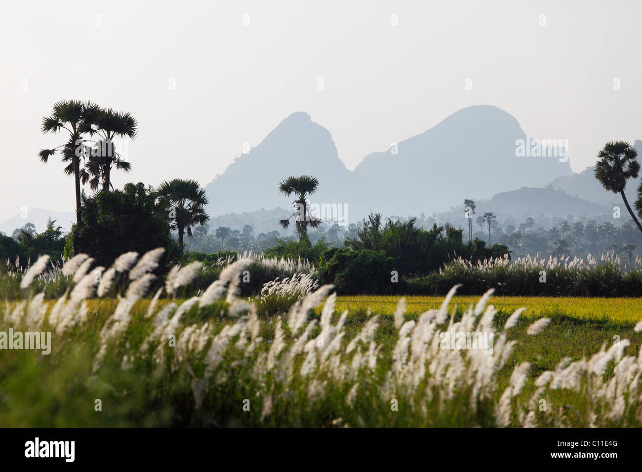 Western Ghats, Courtallam, Tamil Nadu, Tamilnadu, South India, India, Asia - Stock Image