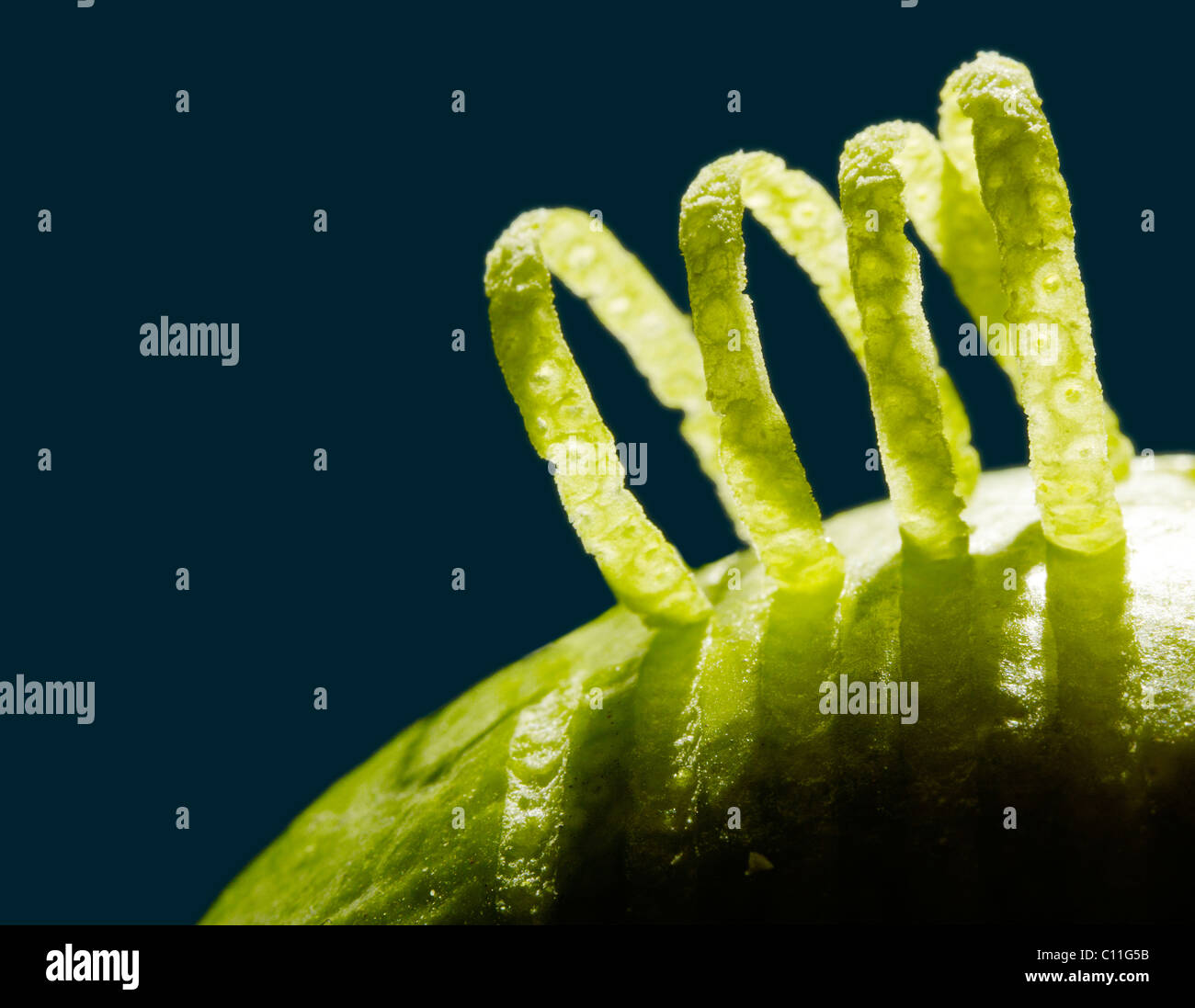 Curls of peel on a Lime, close-up - Stock Image
