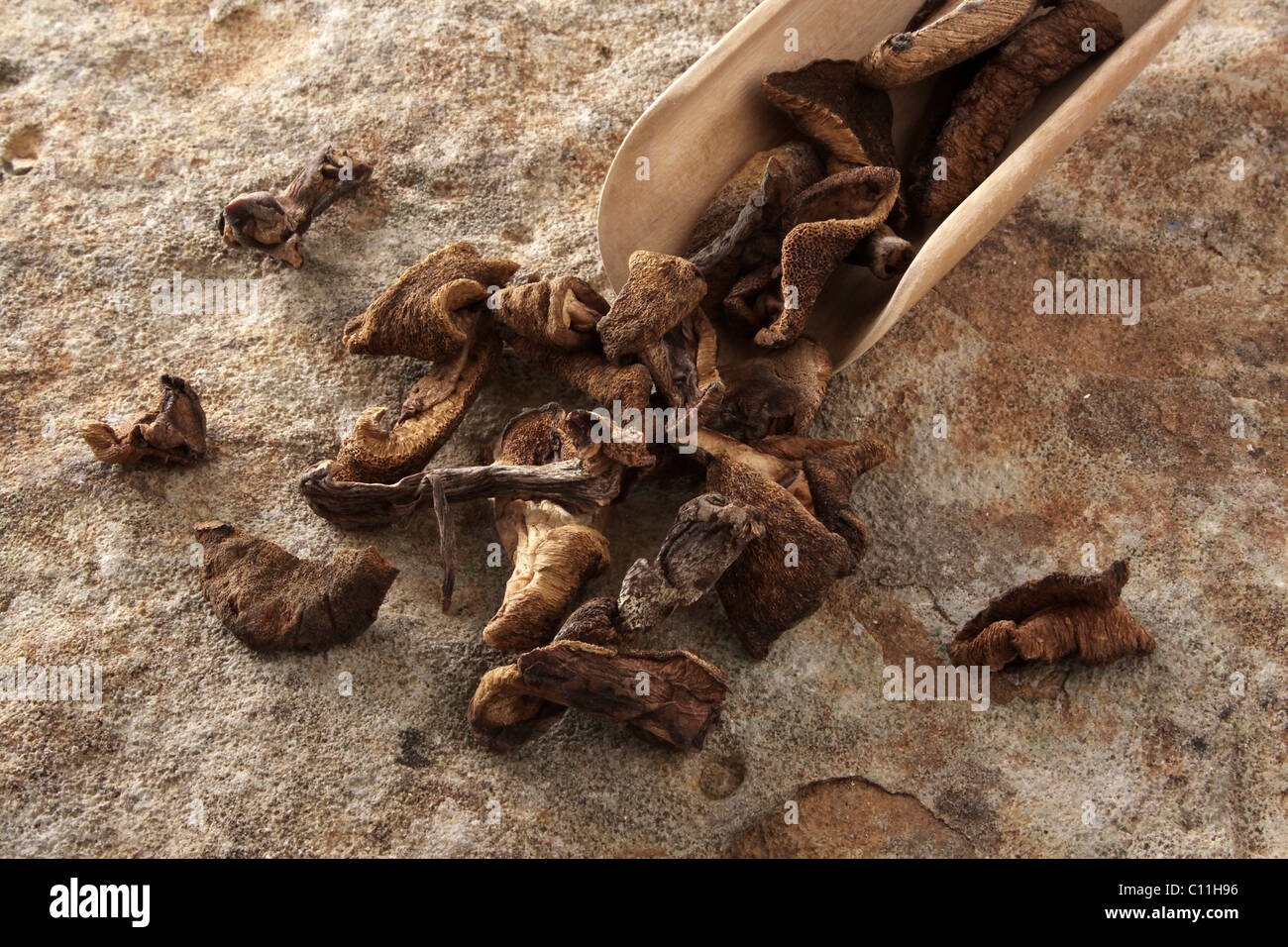 Dried Slippery Jack (Suillus luteus) with a wooden shovel, on stone surface Stock Photo