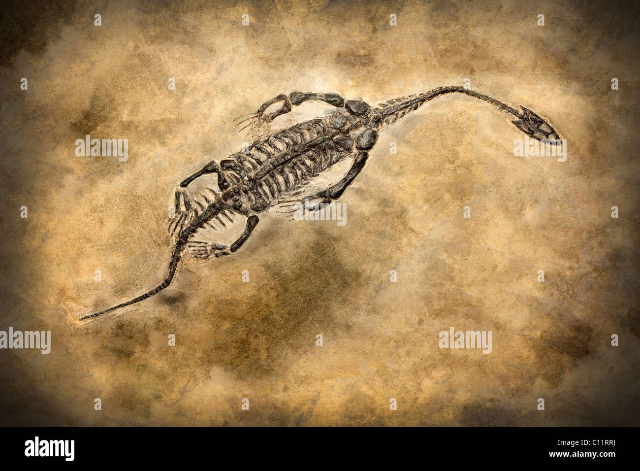 View of a dinosaur fossil. - Stock Image