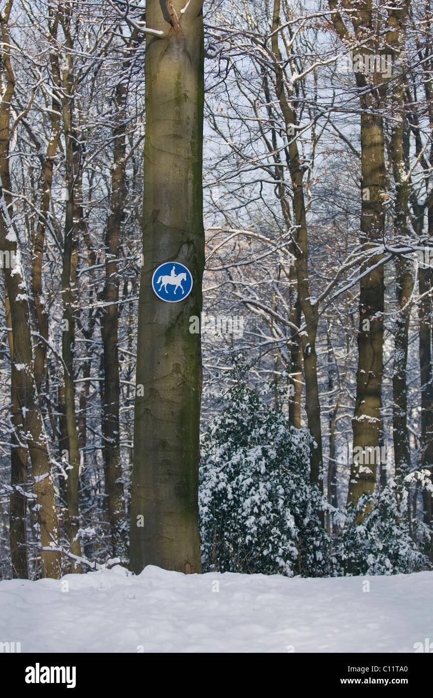 Riding trail sign on a beech trunk in a snowy beech forest - Stock Image