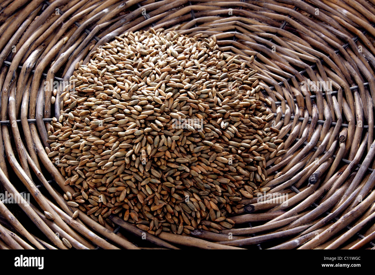Rye (Secale cereale) in a wicker plate - Stock Image