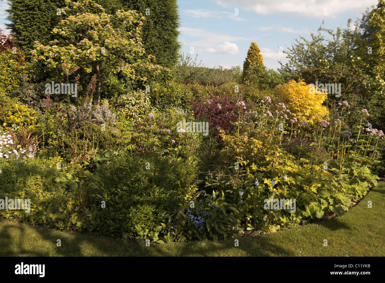 Herbaceous border and shrubs in a domestic suburban back garden ...