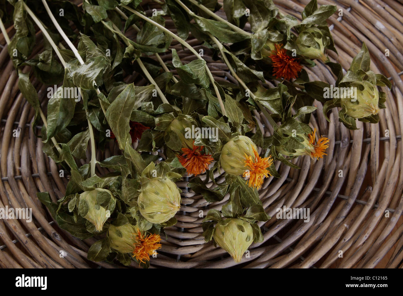Dried distaff thistles (Carthamus) in a woven basket - Stock Image