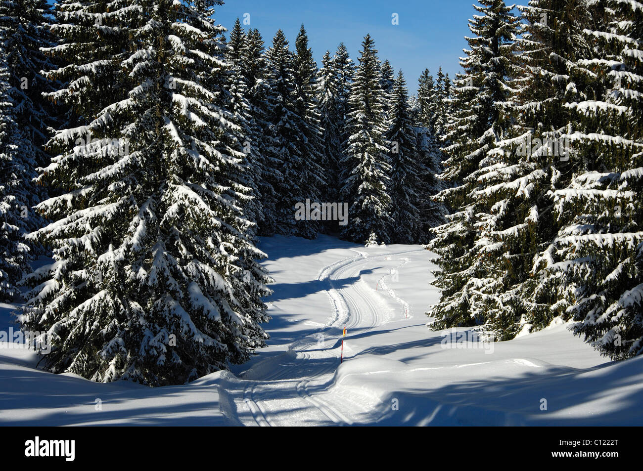 A deserted groomed cross-country ski trail passing through a snowy pine forest in the Jura Mountains, St. Cergue, - Stock Image