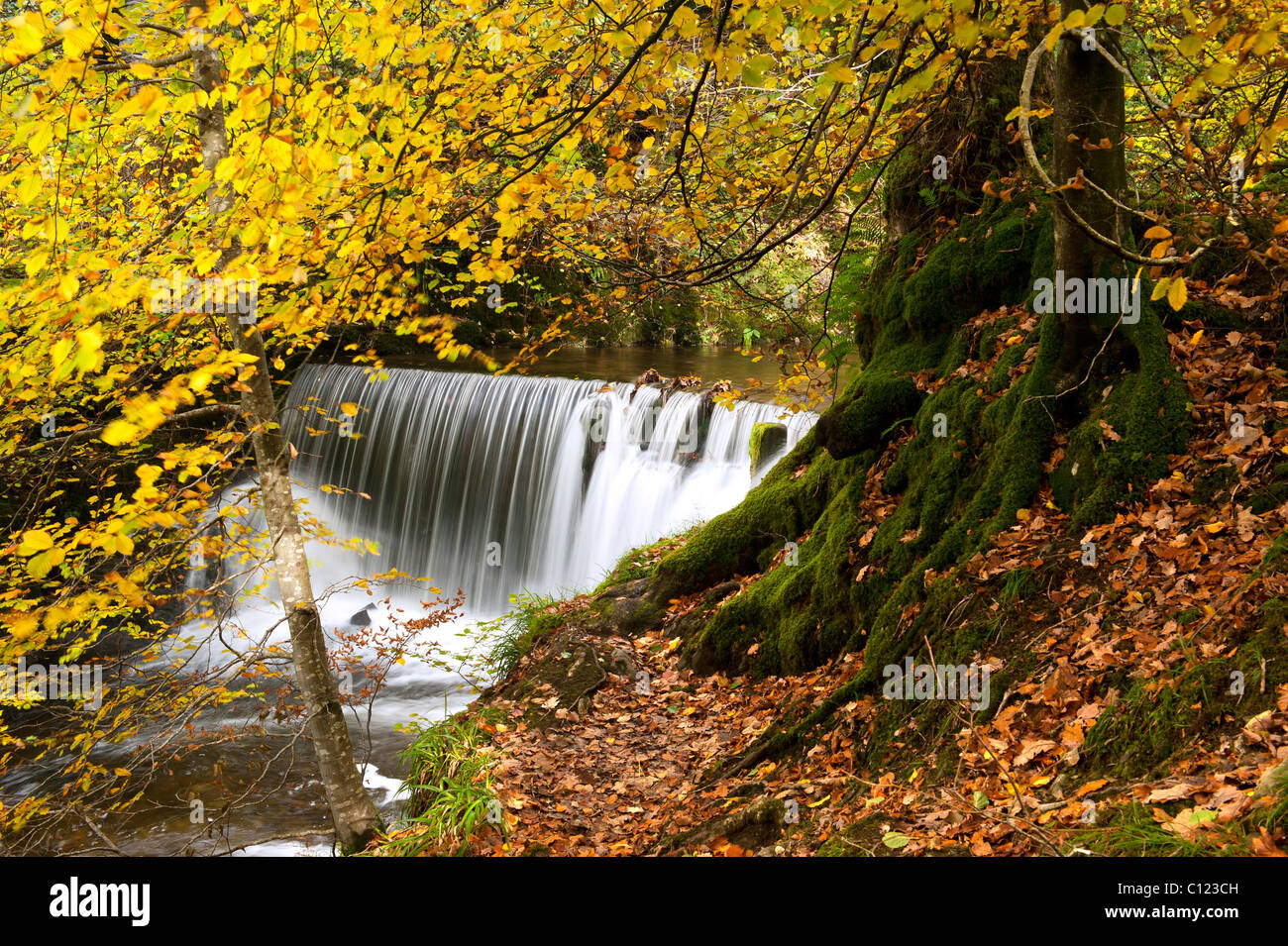 Stockghyll Force in Autumn Ambleside Cumbria UK - Stock Image