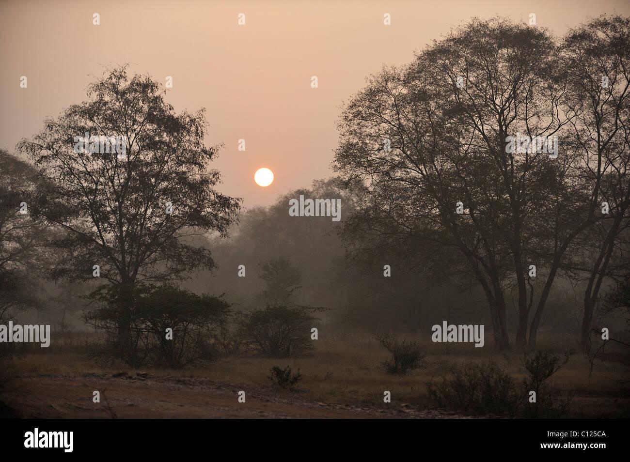 Jungles of Ranthambore National Park at sunrise, Rajasthan, India, Asia Stock Photo