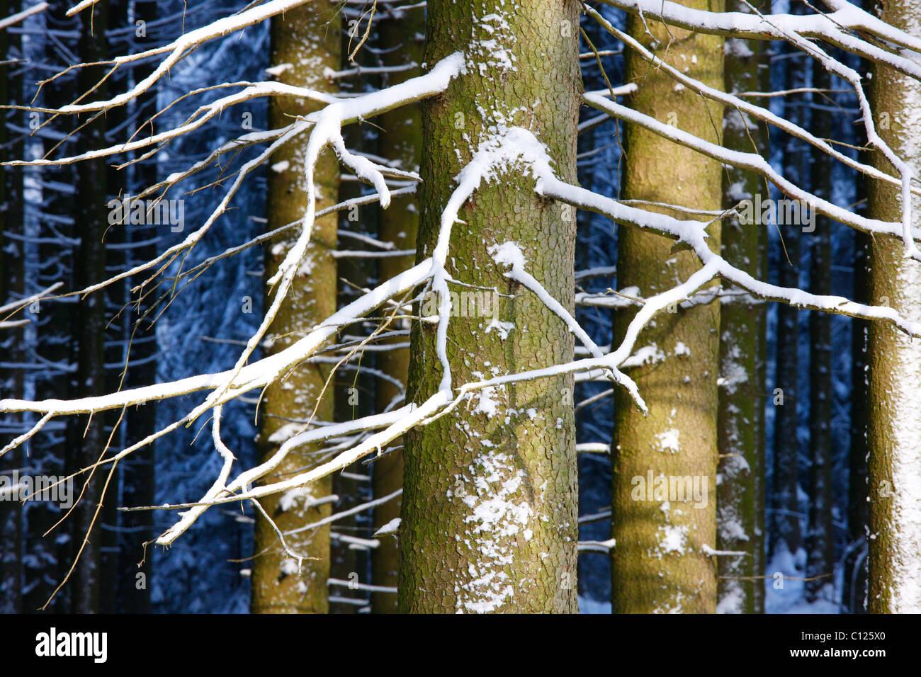 Wintery Forest, Marianske Lazne, Czech Republic, Europe - Stock Image