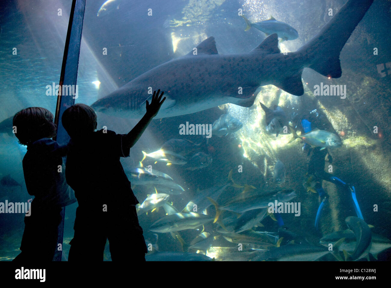 Two Oceans Aquarium, visitors, shark, Victoria & Alfred Waterfront, Cape Town, Western Cape, South Africa, Africa - Stock Image