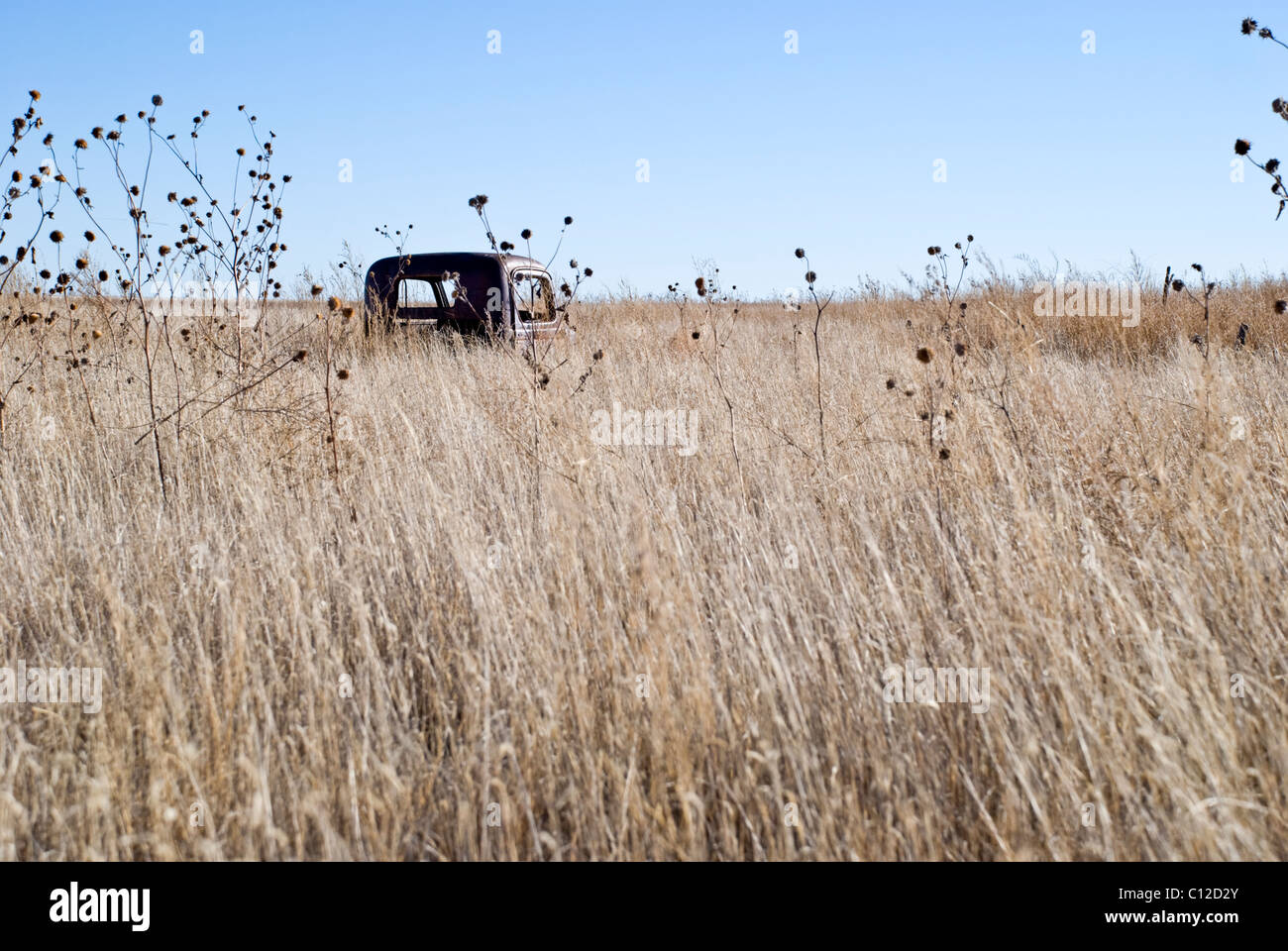 An abandoned truck in Quay County is barely visible above the desert grasses that have grown up around it. - Stock Image