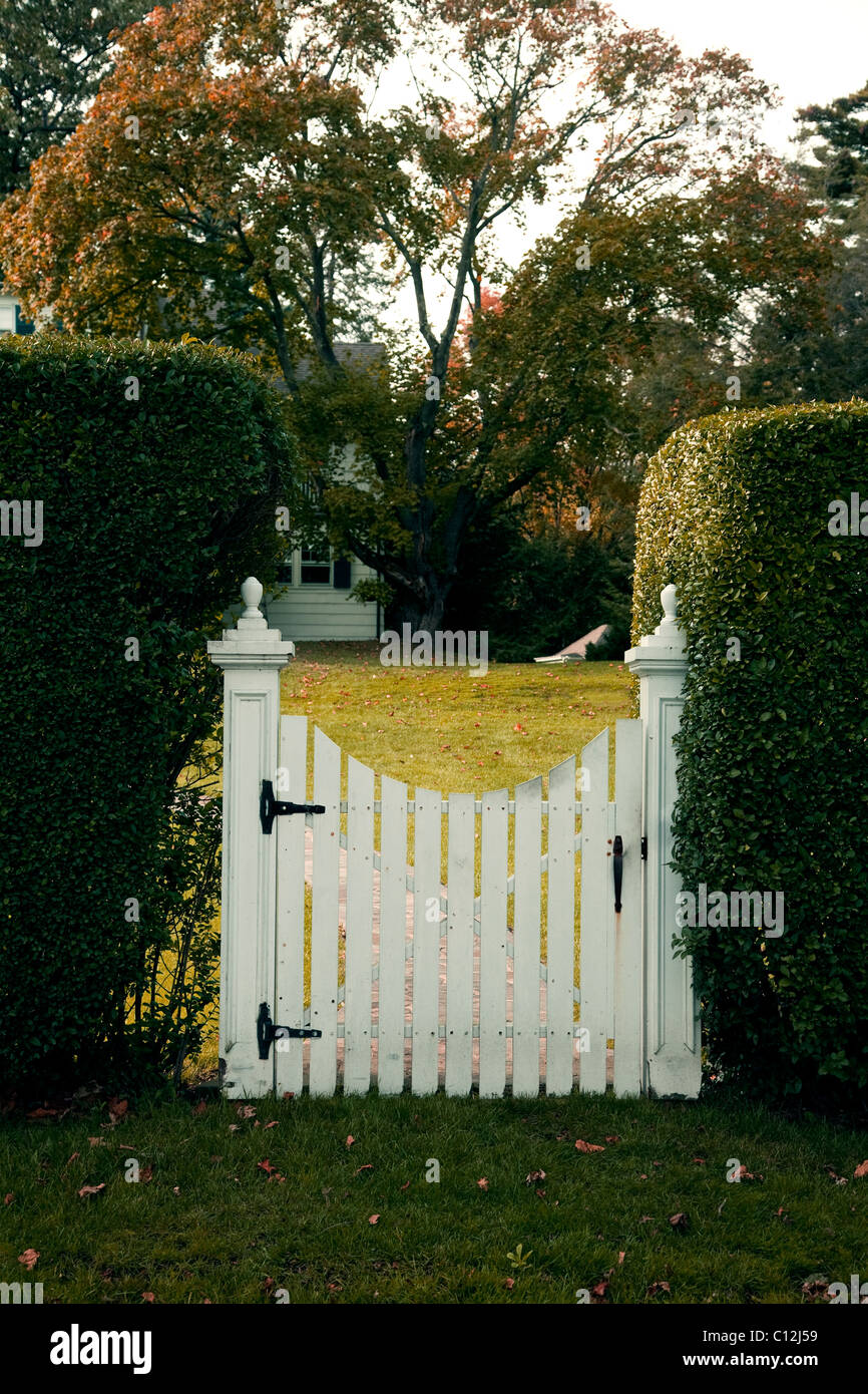 Garden Gate White Picket Gate Set Between Two Hedges
