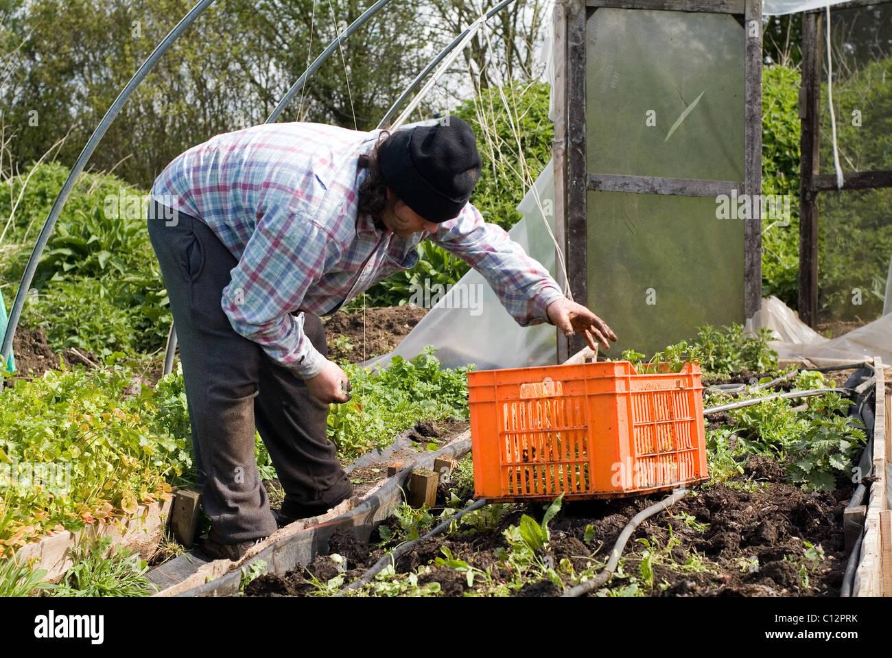 Gardening activity captured at Garden Organic, Ryton, Warwickshire, Uk - Stock Image