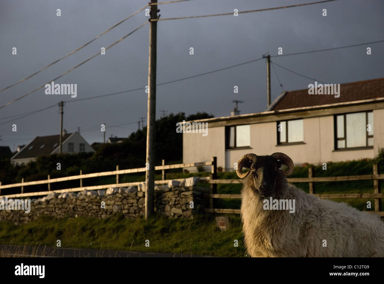 Sheep and house exterior in Achill Island, County Mayo, Ireland - Stock Image