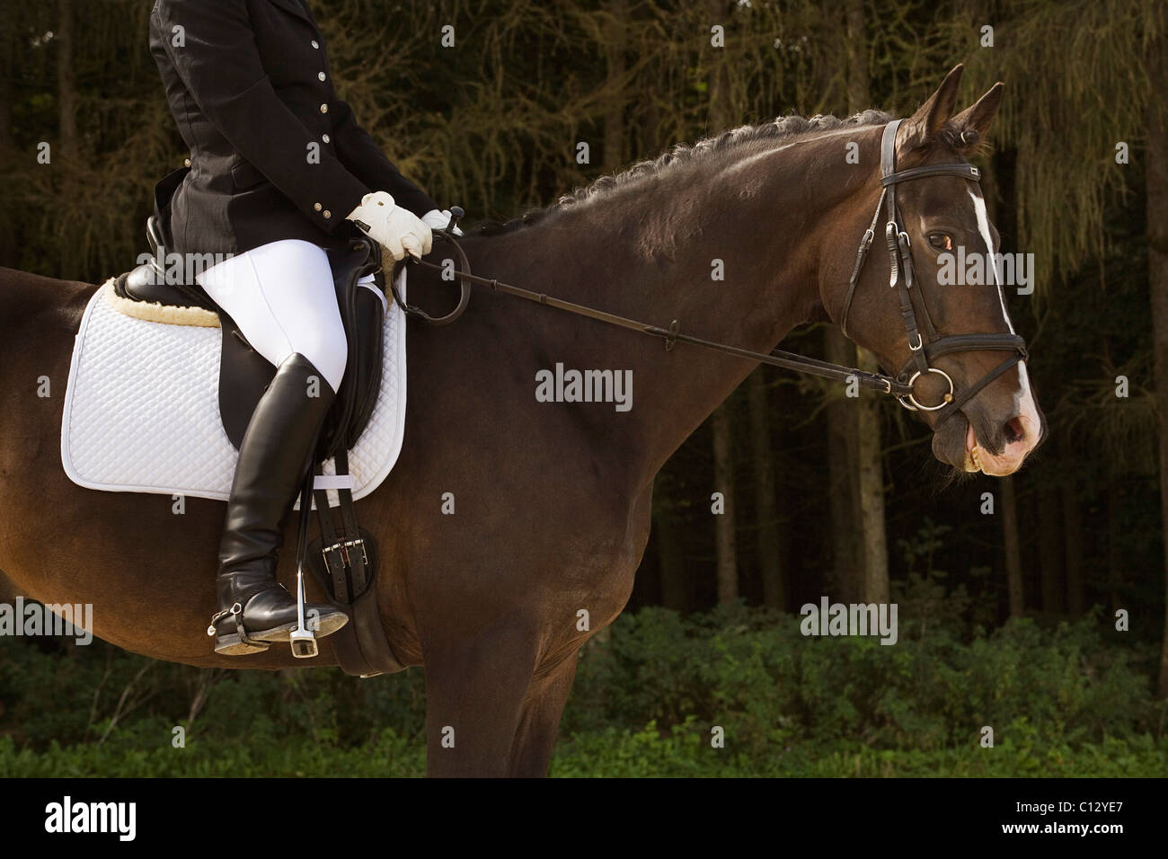 Side View Of Dressage Horse With Rider Stock Photo Alamy