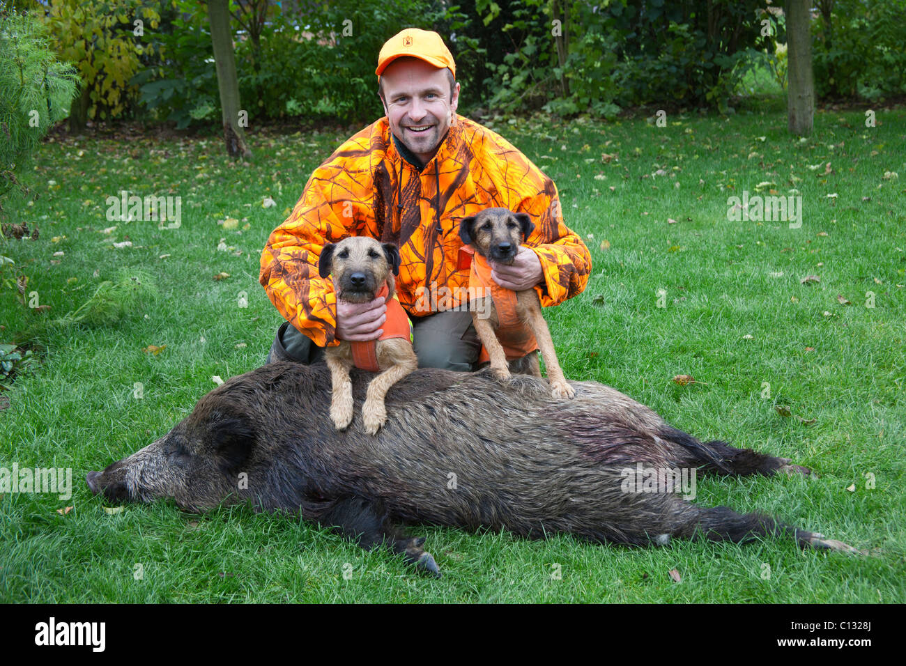 Hunter, with two Westpahlen terriers and wild boar, Lower Saxony, Germany - Stock Image