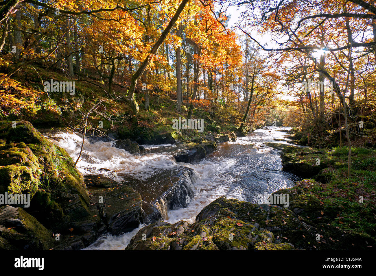 Burn of The Holy Linn near balmaclellan in autumn - Stock Image