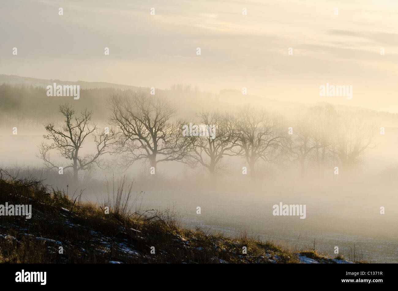 Sunset shining through trees with mist and deep frost - Stock Image