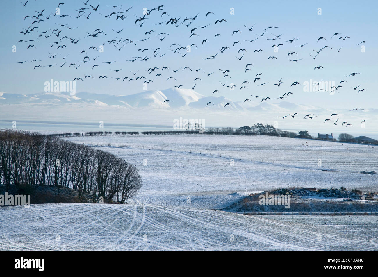 Farmland and Solway Firth by Southerness in snow with geese - Stock Image