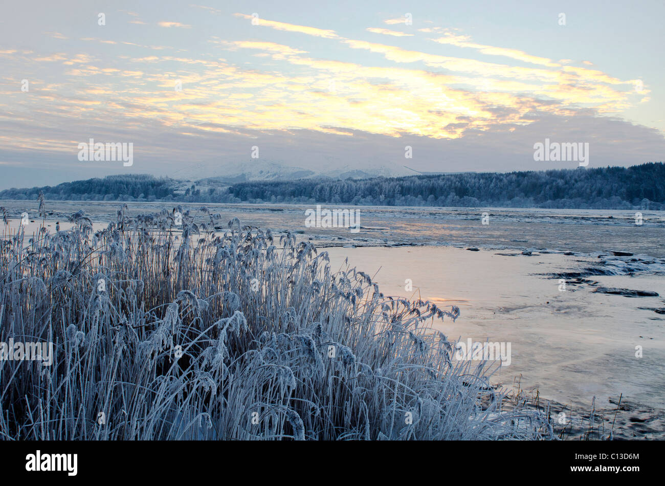 Salt marsh and Reeds at Caerlaverock Nature Reserve in deep midwinter Nithsdale - Stock Image