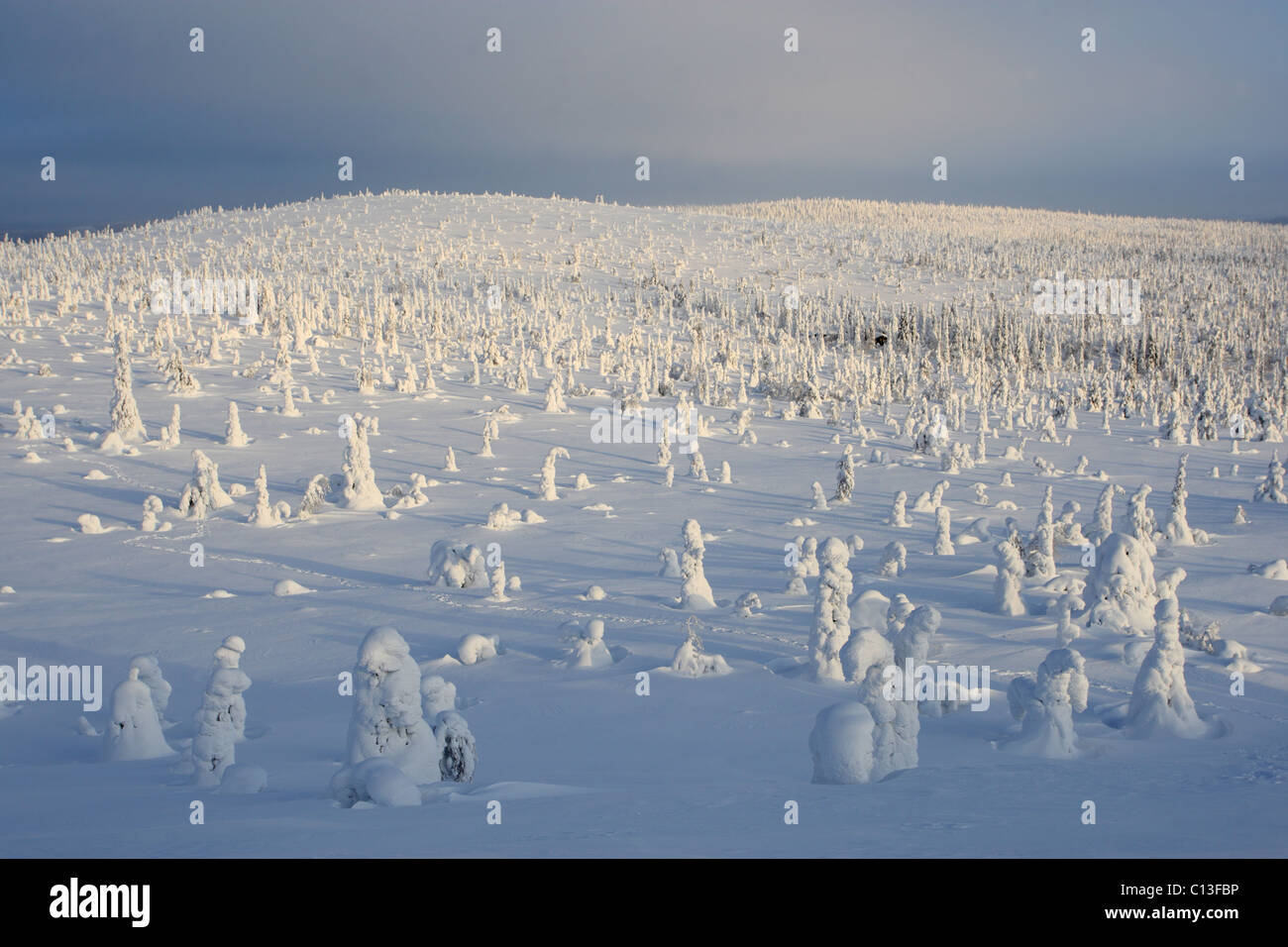 Snow covered trees at Riisitunturi National Park, Lapland, Finland - Stock Image
