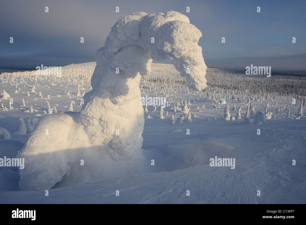 Nature's art. Snow covered trees at Riisitunturi National Park, Lapland, Finland - Stock Image