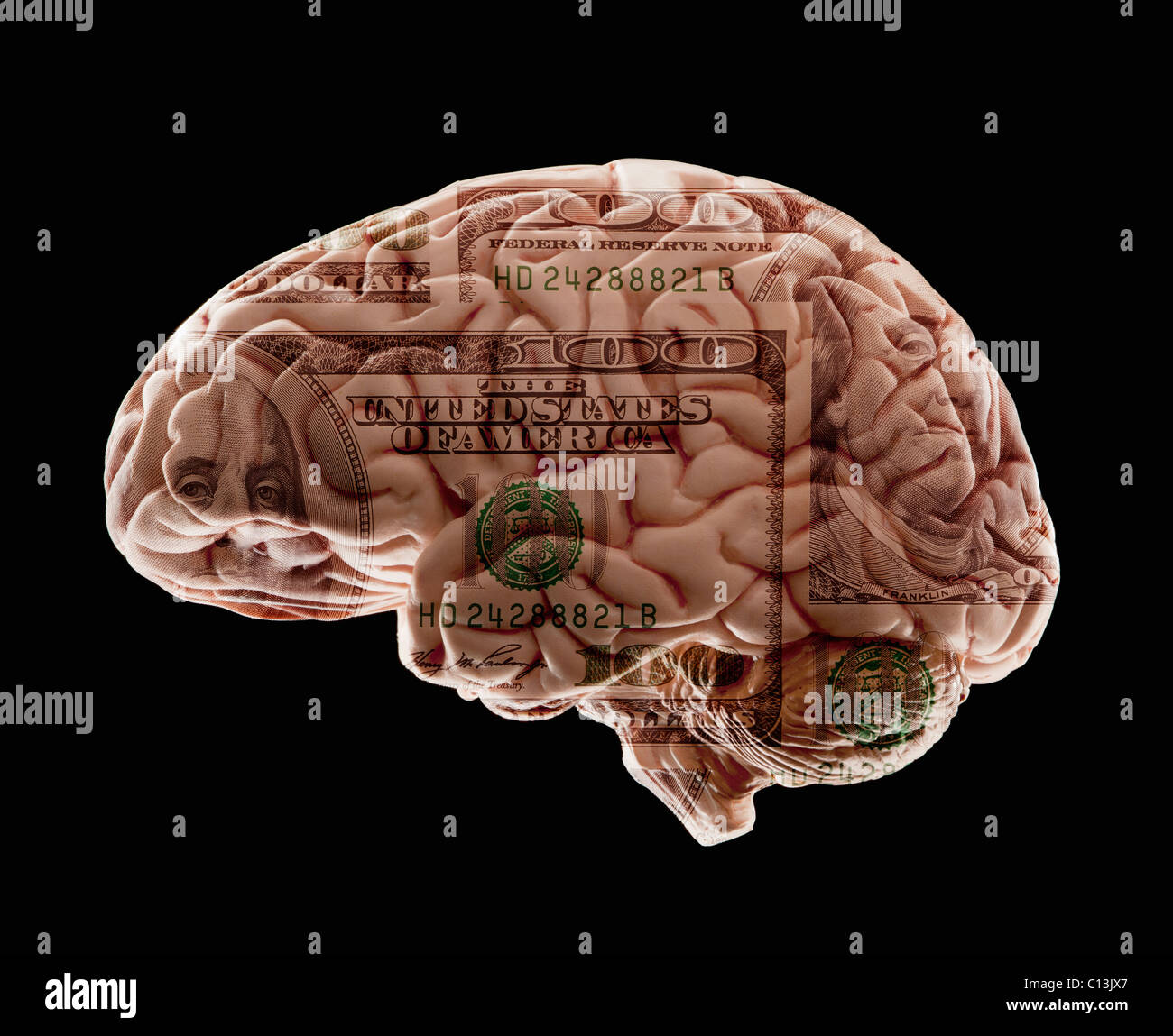 Composition of human brain model and one hundred dollar note - Stock Image