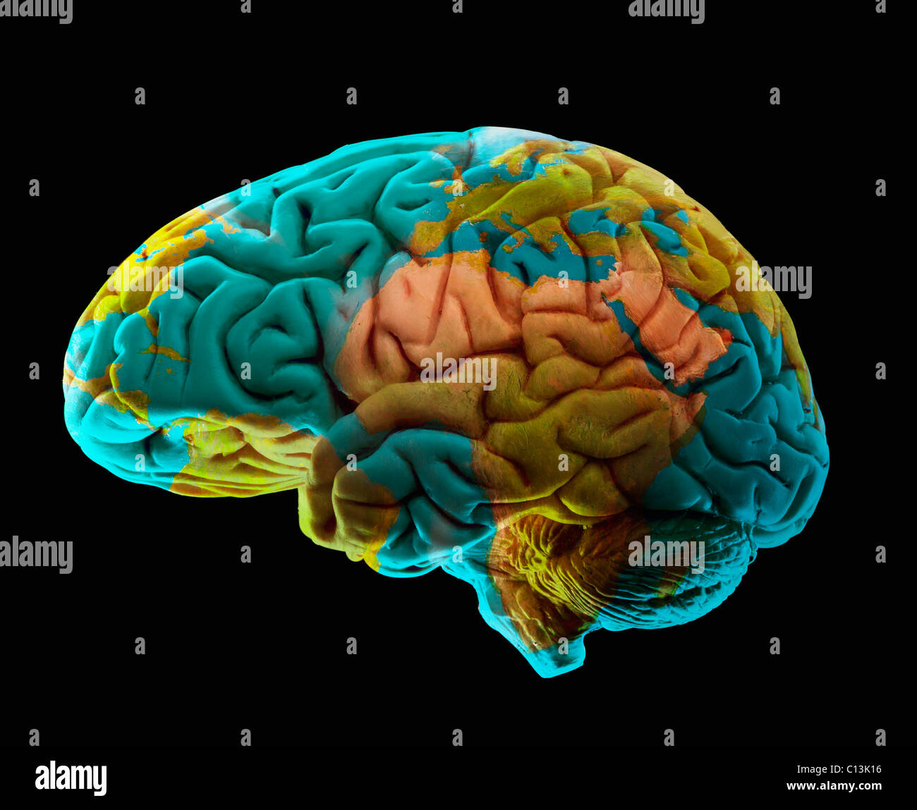 Composition Of Human Brain Model And World Map Stock Photo 35116178