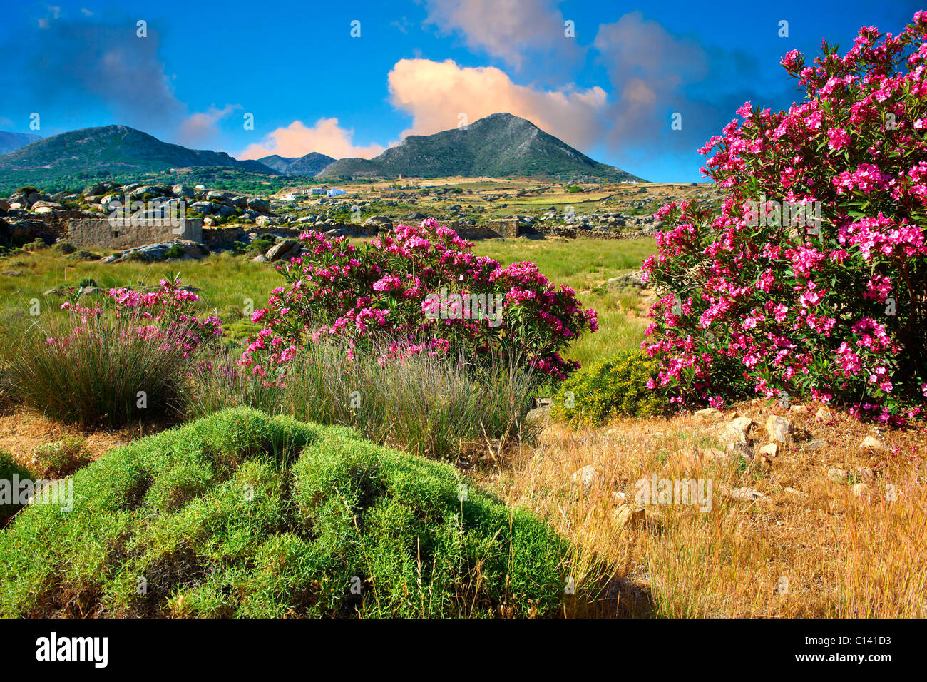 Kalamitsia , Naxos, Greek Cyclades Islands - Stock Image