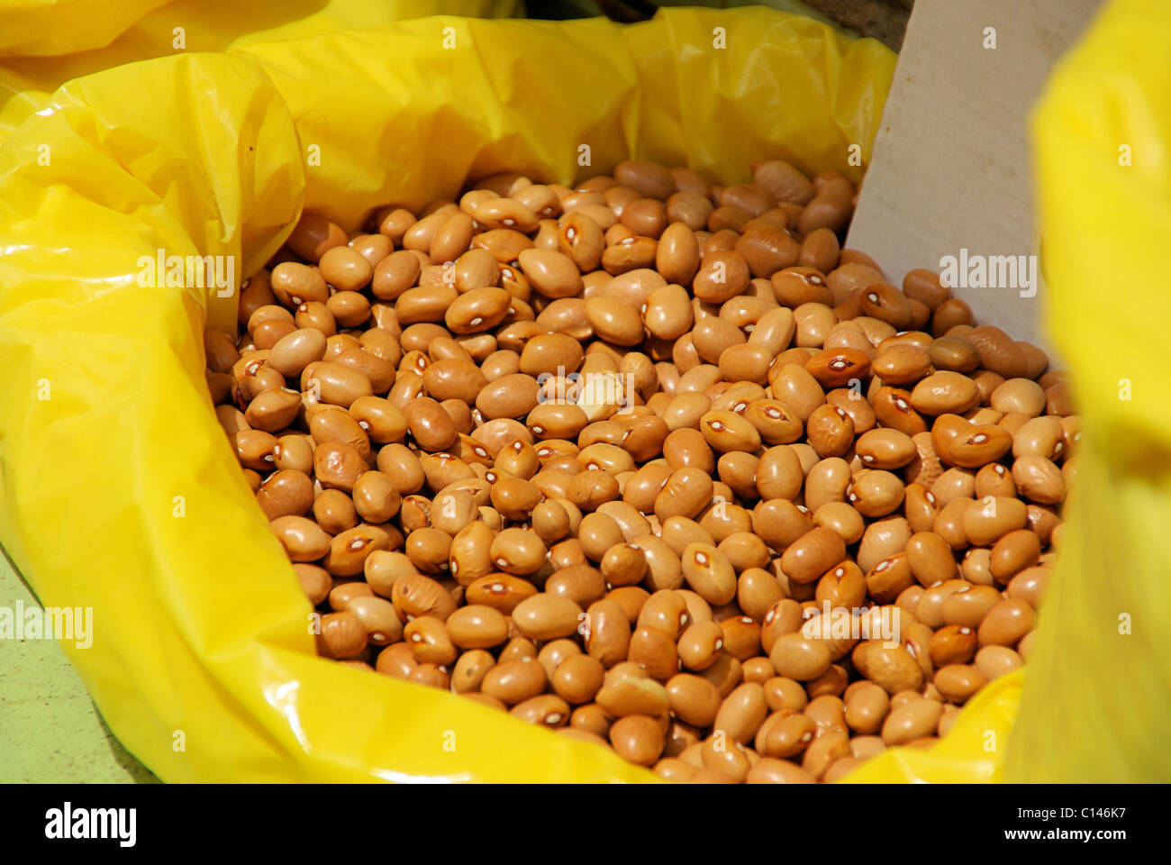 Feuerbohne - runner bean 05 - Stock Image