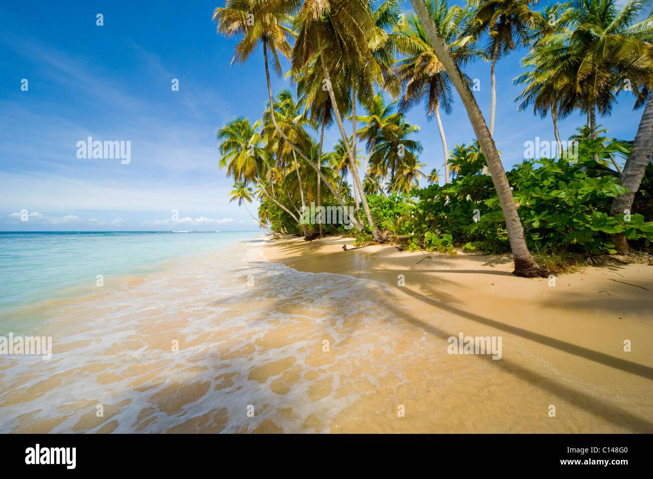 Caribbean beach, tropical. - Stock Image