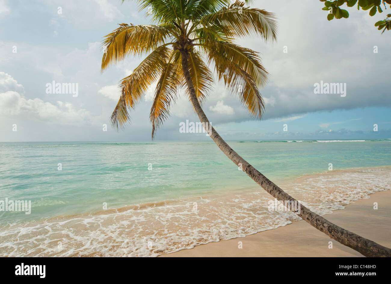 Coconut tree on tropical beach, Pigeon Point, Tobago, Caribbean Stock Photo