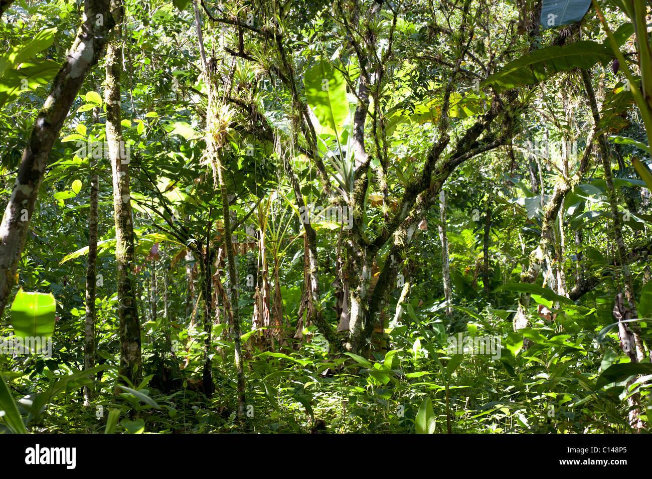 Amazon Rainforest, Brazil, South America. Stock Photo