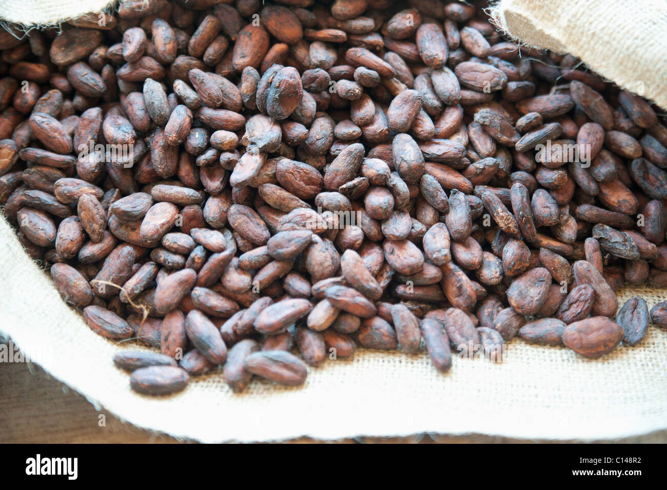 Cocoa seeds, Brazil, South America. Stock Photo
