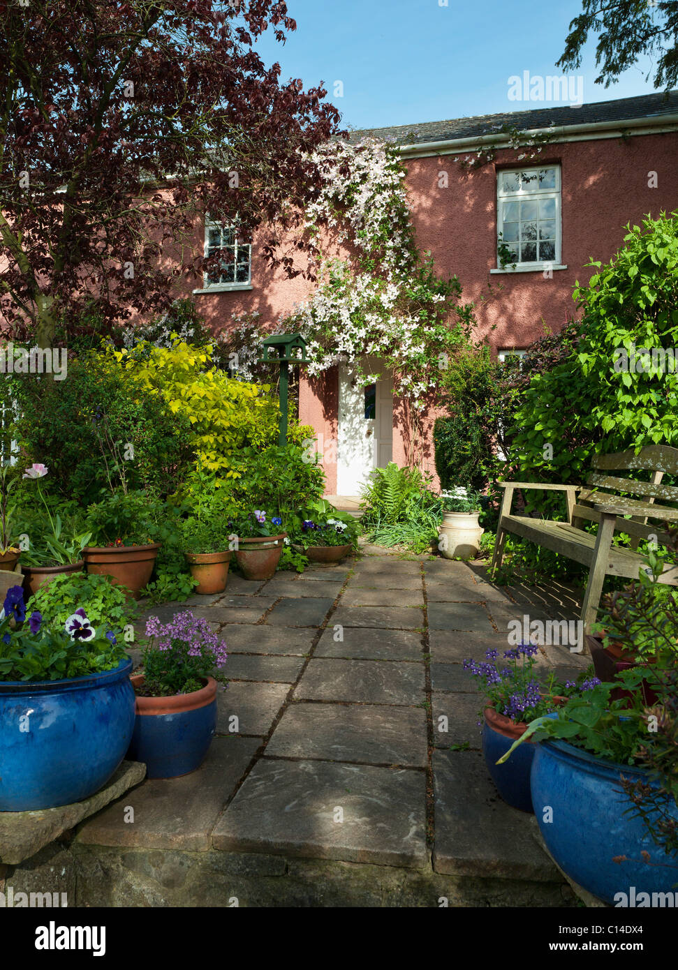 PATIO WITH CLEMATIS MONTANA RUBENS OVER COUNTRY COTTAGE DOOR SUMMER ENGLAND UK - Stock Image