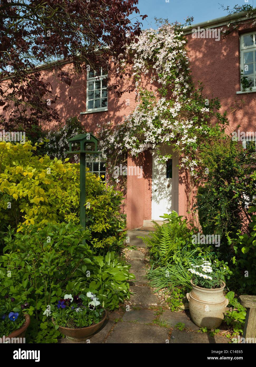 CLEMATIS MONTANA RUBENS OVER COTTAGE DOOR SUMMER ENGLAND UK - Stock Image
