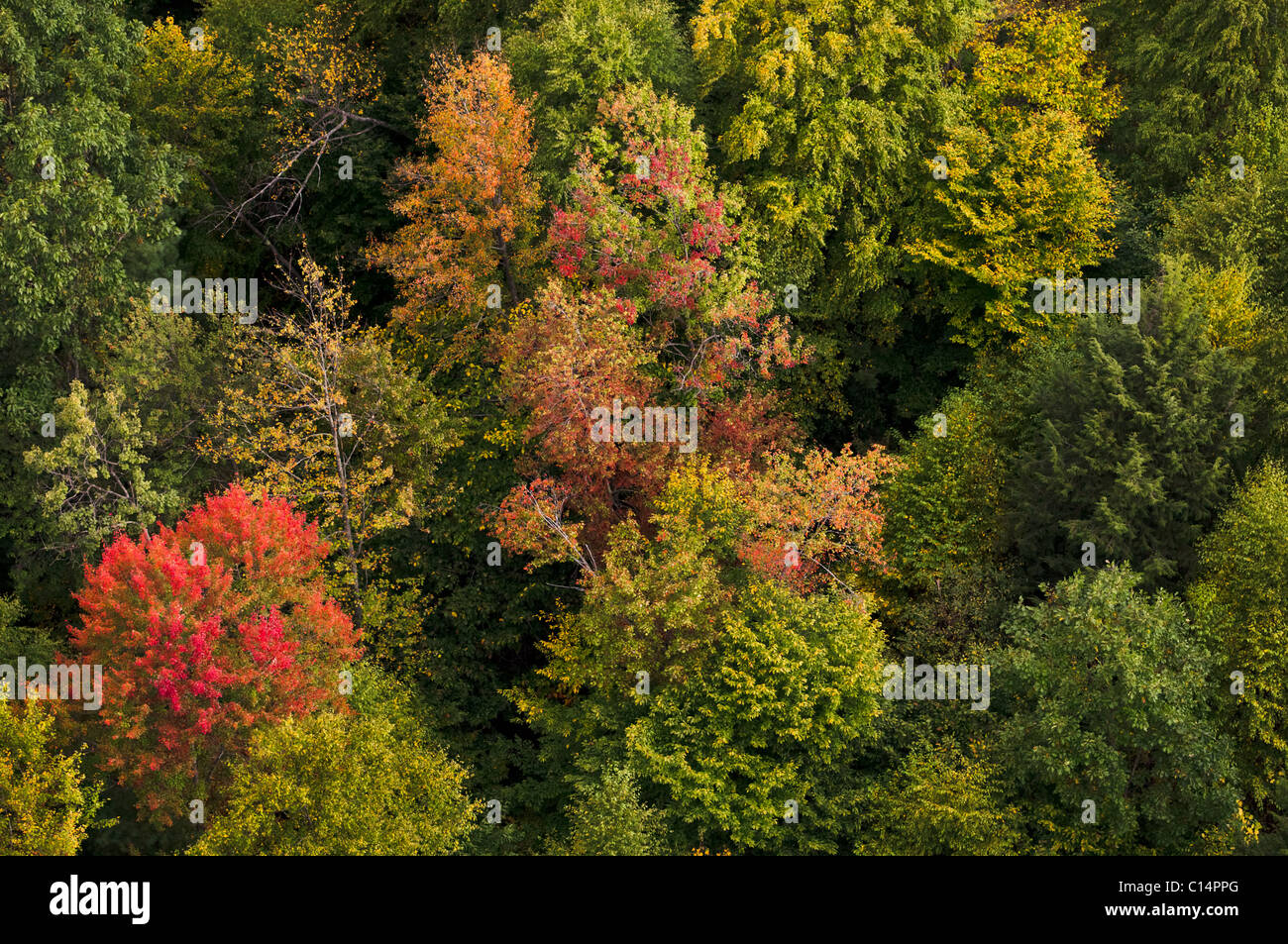 FALL FOLIAGE FOREST AERIAL VIEW BALLOON  WOODSTOCK VERMONT USA - Stock Image